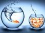 33 Ideas on Leadership