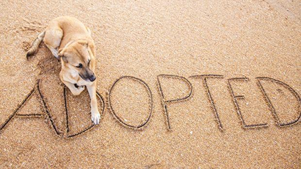 Adopt Shelter Dog